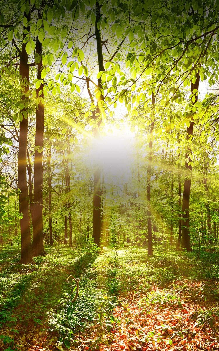 木を活かすことで深林を育む。